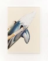 Uh‐Huh (Dolphin)